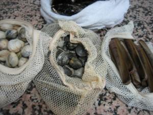 marisco 300x225 Consejos paso a paso LXXXIII : Conservar el marisco fresco