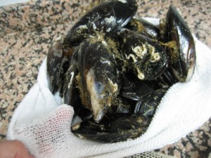 marisco redecilla 300x225 Consejos paso a paso LXXXIII : Conservar el marisco fresco