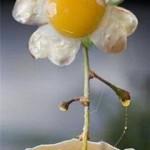 huevo2 150x150 Fotos de comida Curiosa